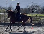 Reitunterricht Reiten Pferd