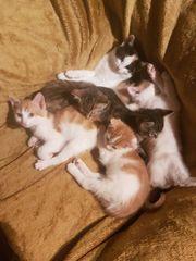 6 süsse Katzenbabys