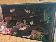 Leopardgeckos Terrarium