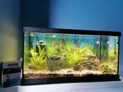 Eheim Aquastar 54 LED Aquarium
