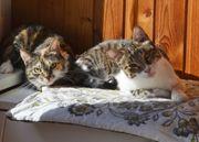 Katzen Paar Manetschka und Timoscha