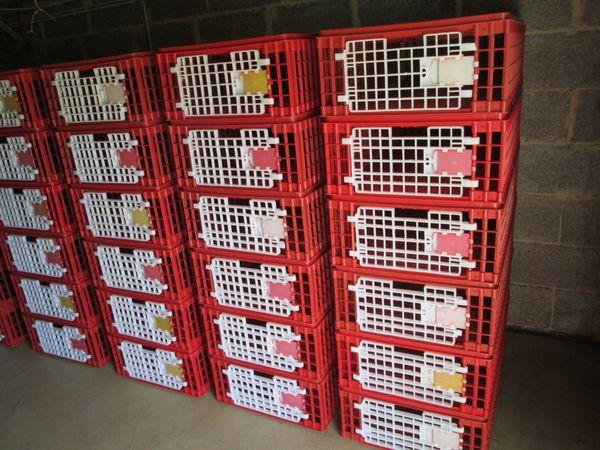Geflügel Transportkisten gebraucht zum Verleih und Kauf
