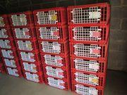 Geflügel Transportkisten gebraucht zum Verleih
