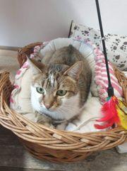 Katzendame Lilly sucht ein Zuhause