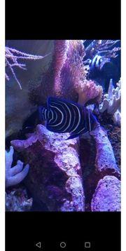 Aquarium Fisch Meerwasser