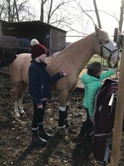 Kindergeburtstage auf dem Pferdehof