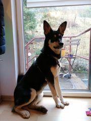 VERMISST Familienhund Milow