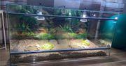 Schildkröte mit Terrarium zu verkaufen