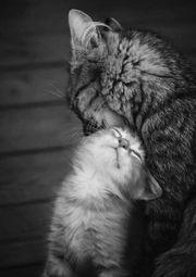 Wir würden gerne einem Kätzchen