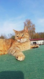 Katze Vermisst Suche