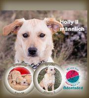 Holly II- mit den Ohren