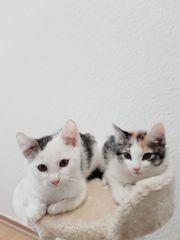 Babys Hauskatze Mix Kätzchen