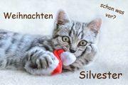 Weihnachten Silvester im Bayerischen Wald -