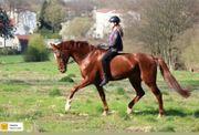 Pferd als Reitbeteiligung gesucht