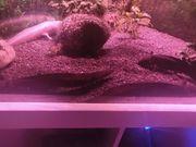 Axolotl Gruppe