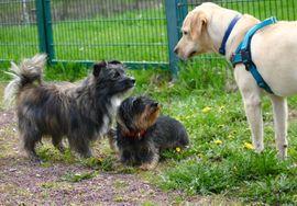 Tierbetreuung - Willkommen in der Hundeschule