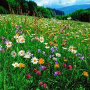 Ein Garten wäre schön