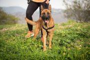 BRUNO - Ein freundlicher aktiver Hund