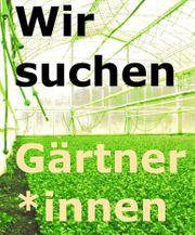 Suche ab sofort Gartenhelfer Gärtner