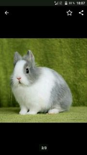Nehme ihre Kaninchen wenn sie