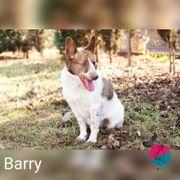 Barry - Na wenn das mal