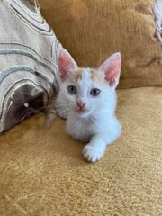 Kätzchen Tilly sucht ein Zuhause