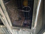 Vierjahreszeiten-Meerschweinchen Kaninchenstall zu verschenken