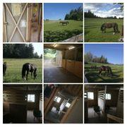 Kommpletter Pferdestall zu verpachten