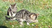 Katzenduo - einzeln oder zu zweit