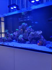 Red Sea Reefer 425 XL