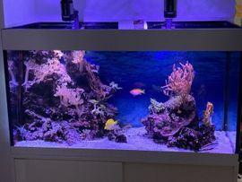 Bild 4 - Meeresaquarium komplett - Flein