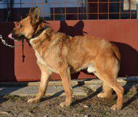 Hunde - Rox möchte wieder vertrauen können
