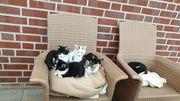 Junge Kätzchen suchen ein liebevolles