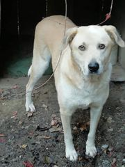 Notfall Labradormix sucht ein Körbchen
