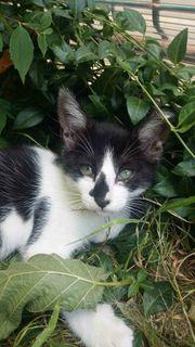 Bonny Katze aus dem Tierschutz