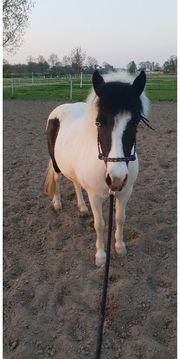 Süße Ponystute sucht Platz auf