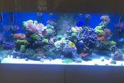 komplett Meerwasseraquarium