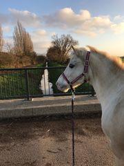 Reit-Pflegebeteiligung Pony zur Verfügung