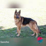 Sancho - Auf der Suche nach