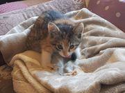 Hauskatzen kostenlos abzugeben