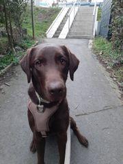 Besonderer Hund sucht Einzelplatz