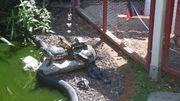 1 2 teichfeste Wasserschildkröten