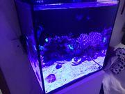 Meerwasseraquarium salzwasser komplett