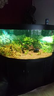 Aquarium Juwel 350 Liter