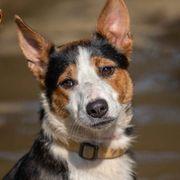 Gepetto - der immer-gute-Laune-Hund