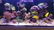Meerwasser Korallen auf Säule