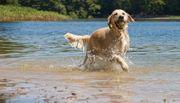 Hundebetreuung Sommerferien