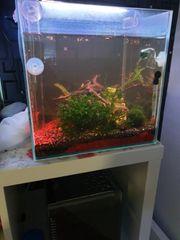 aquarium 30l mit viele verschiedene