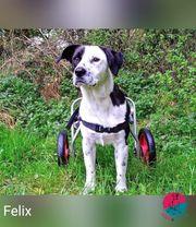 Felix - Hund mit Handicap sucht