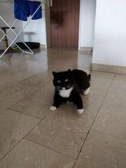 Katze Twinny wird vermisst